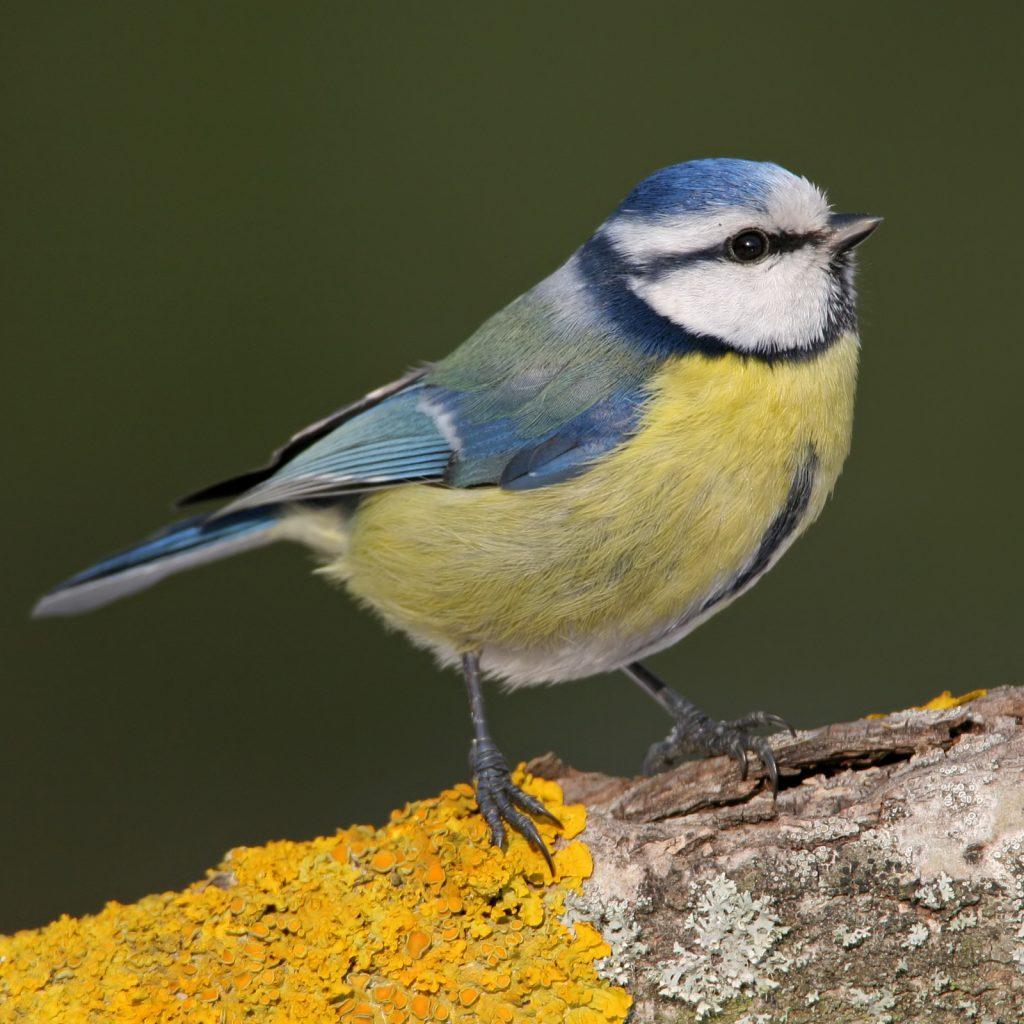 Wie kann ich beim Vogel-Monitoring helfen?