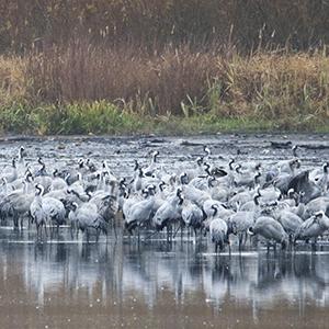 Vogelmonitoring-Bericht für 2019 erschienen